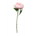 Assiettes Liberty Rose à Fleurs rose clair
