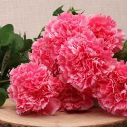 Oeillets Roses Fleurs Artificielles Premium